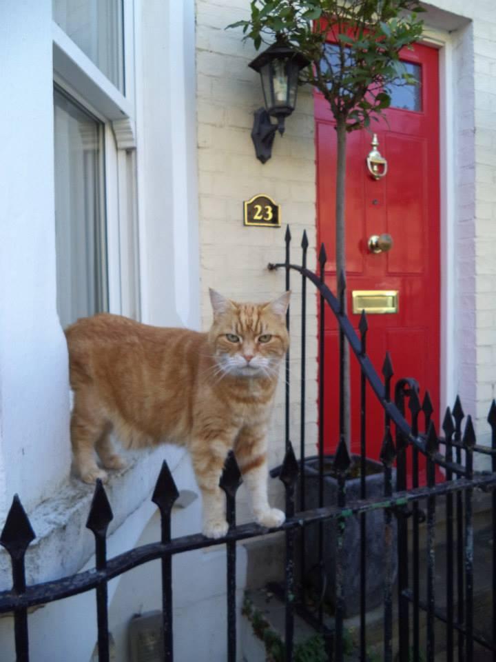 Cat in Cambridge, England
