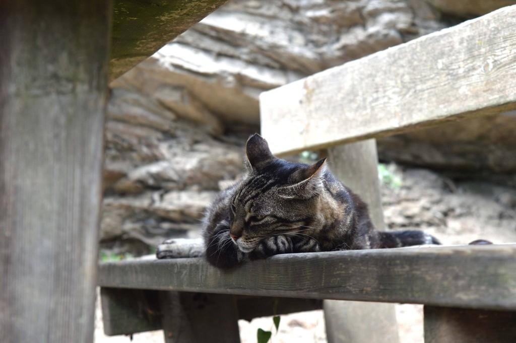 Cinque Terre cat