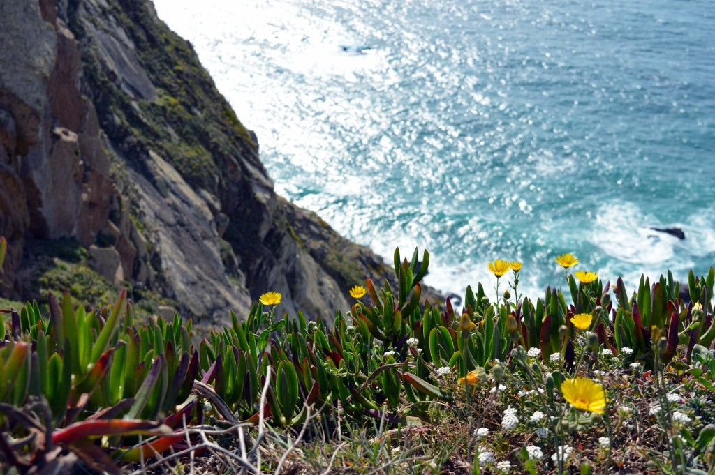 Flowers at Cabo da Roca